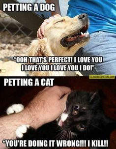 One of 10 Reasons Why Dogs are Better Than Cats http://regalbeaglemania.com/dogs-better-than-cats/