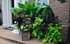 McCullough's Landscape & Nursery ( Containers Annual Color )