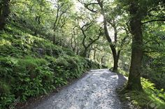 Image result for wicklow forest
