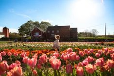 Enjoy several acres filled with some of the most vibrant and beautiful tulips you've ever seen at this wonderful farm found in Rhode Island. New England States, New England Travel, New Hampshire, Rhode Island, Le Vermont, Oh The Places You'll Go, Places To Visit, Tulip Fields, My Escape