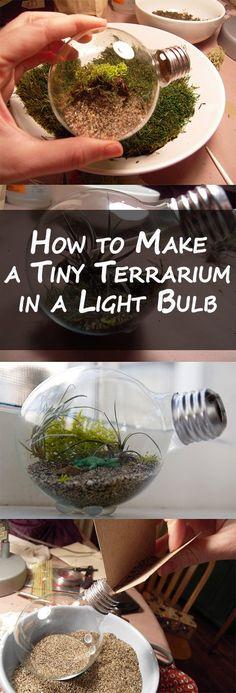 How to Make a Tiny Terrarium in a Light Bulb