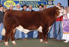 LaGrand Reload 80P ET P42539056 2007 National Champion Sire: AA PRF Wideload Dam: TSF MS Keynote 729 - 20x daughter BW 6.6, WW 55, YW 96, MM 30, M&G 58, REA .69