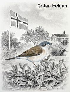 Jan Fekjan: Møller Giclee Print, Birds, Fine Art, Prints, Artist, Painting, Animals, Ideas, Animales