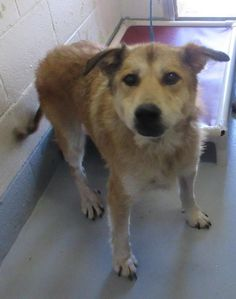 "ADOPTED - SAMPSON ""137288"" - SUPER URGENT - PORTAGE COUNTY DOG WARDEN SHELTER in Ravenna, OH - 16 year old Male Shepherd Mix"