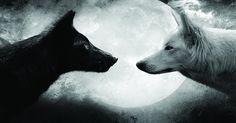 O SILENCIO DOS LOBOS -  Lobos não gritam. Eles têm a aura de força e poder. Observam em silêncio. Somente os poderosos, sejam lobos, homens ou mulheres, respondem a um ataque verbal com o silêncio.  Exatamente por isso, o primeiro e mais óbvio sinal de poder sobre si mesmo é o silêncio em momentos críticos. .,,,quem silencia mostra que já venceu, mesmo quando o outro lado insiste em gritar a sua derrota.Olhe. Sorria.  Silencie. Vá em frente.