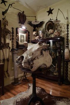 Naturalist inspirations for interior design. Skeletons and taxidermy, old display cases, resin casts of things, etc.