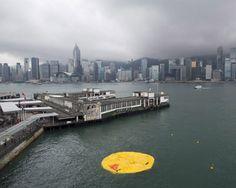 florentijn hofmans giant rubber duck: the aftermath