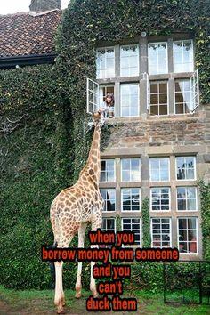 #funnystuff #lol #meme  #lmao #growningupblack #truestory #funny