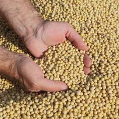 Global Genetically Modified Seeds Market- By Key Players, Type, Application, Region, and Forecast - Fashion Observer 24 Key Player, Food Safety, Diet And Nutrition, Dog Food Recipes, Seeds, Free Products, Marketing, South Africa, Canada