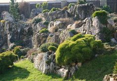 Crevice Gardening ......in defence of rock.....