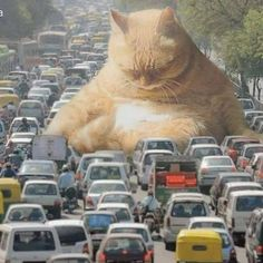 Catzilla and his kittens un the city! Cute Cat Gif, Funny Cute, Cute Cats, Animals And Pets, Funny Animals, Cute Animals, Crazy Cat Lady, Crazy Cats, Giant Cat