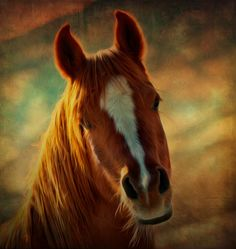Sweet face, For the Horse Lovers