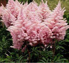 Cheap Flowers Near Me | Bulk Flowers
