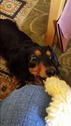 It's my toy, let go!
