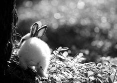 animal photography black and white #blackandwhiteanimalphotography