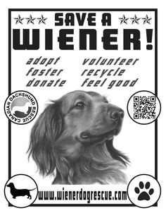 There are so many ways to help Canadian Dachshund Rescue! Dachshund Rescue, Ontario, Animaux