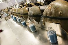 HORSESHOE CRAB BLOOD IS AN IRREPLACEABLE MEDICAL MARVEL—AND SO BIOMEDICAL COMPANIES ARE BLEEDING 500,000 EVERY YEAR. CAN THIS CREATURE THAT'S BEEN AROUND SINCE THE DINOSAURS BE SAVED?