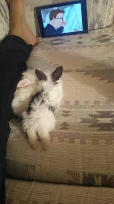 Bunny needs his relaxation time!