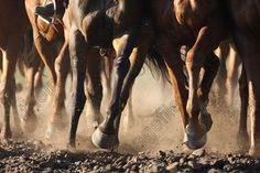 horse legs dust - Google Search