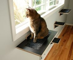 Beautiful and Functional Cat Climbing Shelves from Square Cat Habitat