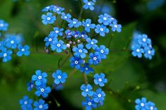 8 Shade flowers