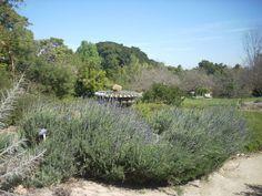 Jardines de secano: La escasez de agua no significa renunciar a un jardín