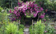 Kletterpflanzen für Sonne und Schatten -  Ob sonnig, halbschattig oder schattig – für jeden Standort im Garten gibt's die richtigen Kletterpflanzen.
