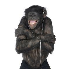 Love my ipod - Chimpancé Murdaskedano  http://soymurdaskedano.wordpress.com/