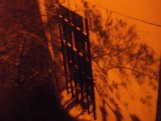 Surya Monday 13th January 2014 Tree Shadow