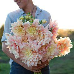 Dahlia Break Out – Floret Flower Farm Cut Flower Garden, Flower Farm, My Flower, Flower Power, Types Of Flowers, Beautiful Flowers, Le Far West, Summer Garden, Garden Planning