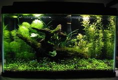 A 10g planted tank10 x Neon TetrasDIY CO2 injection 3 WPG lighting