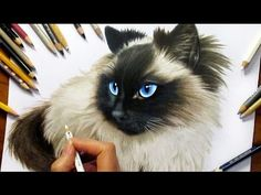 Drawing Subscribers' Pets #2 ❤ Zida, Ragdoll Cat from Holland - Speed Draw | Jasmina Susak - YouTube