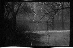 Josef Sudek, Photographic sketch in the Kinsky Park, Prague