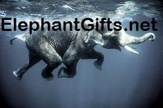 Visit ElephantGifts.net for more funny elephant photos and videos Elephant Pictures, Elephants Photos, Funny Elephant, Photo And Video, Videos, Elephant Photography, Elephant Photography