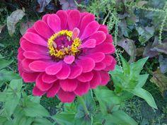 Garden Ideas, Plants, Lawn And Garden, Landscaping Ideas, Plant, Backyard Ideas, Planets