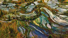 中国雲南省の元陽棚田はユネスコの世界遺産に登録されるほどの美しさを誇っている。数千段にわたってつづく棚田は水面に空や雲を映し出し、鮮やかで幻想的な色合いをつくりだす。その風景はまるで抽象絵画のようだ。