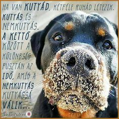 Rottweiler, I Love Dogs, Animals And Pets, Pitbulls, Puppies, Happy, Quotes, Snoopy, Animal Pictures