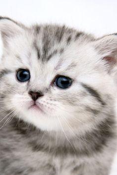 Cutie!!!! Adorable kitten!!!!!!!!!