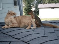 This Frisky Squirrel Wrestling With a Family's Cat is Too Funny  - CountryLiving.com