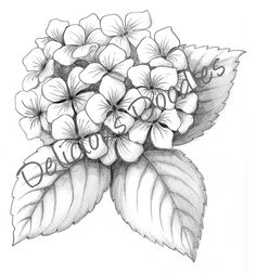 Black and white hydrangea sketch love this for a tattoo!
