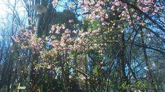 Spring in Margit sziget