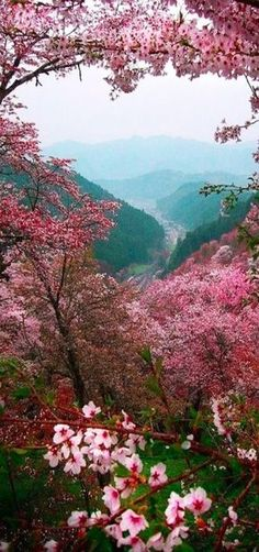 Pink mountain trees flowers