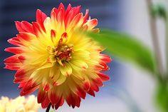 Flower Power by Einsilbig