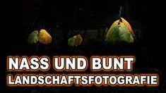 BESTES WETTER für die herbstliche LANDSCHAFTSFOTOGRAFIE? HOCHNEBEL! Plants, Scenery Photography, Mists, Weather, Plant, Planets