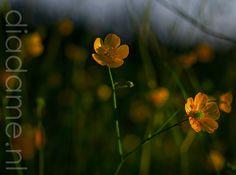 Bloemen, zomer