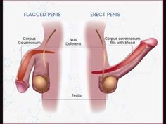Find Erection Male Sex Organ Penis stock images in HD and millions of other royalty-free stock photos, illustrations and vectors in the Shutterstock collection. Thousands of new, high-quality pictures added every day. Enhancement Pills, Male Enhancement, 65 Years Old, Workout Regimen, Blood Vessels, Health Problems, Exercise, Socks, Week Diet