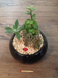 Um mini jardim para a joaninha :)