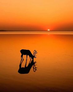 What an incredible sunset! Wheres the best sunset youve seen? Reflection Photos, Reflection Photography, Sunset Photography, Canon Photography, Landscape Photography, Photography Photos, Lifestyle Photography, Animal Photography, Travel Photography