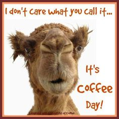 Wednesday Coffee Memes # wednesday Humor 60 Wednesday Coffee Memes, Images & Pics to Get Through the Week Wednesday Coffee, Wednesday Hump Day, Wednesday Humor, Wednesday Greetings, Coffee Talk, I Love Coffee, My Coffee, Coffee Beans, Coffee Today