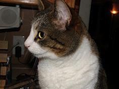 Jessy Sweet Cat